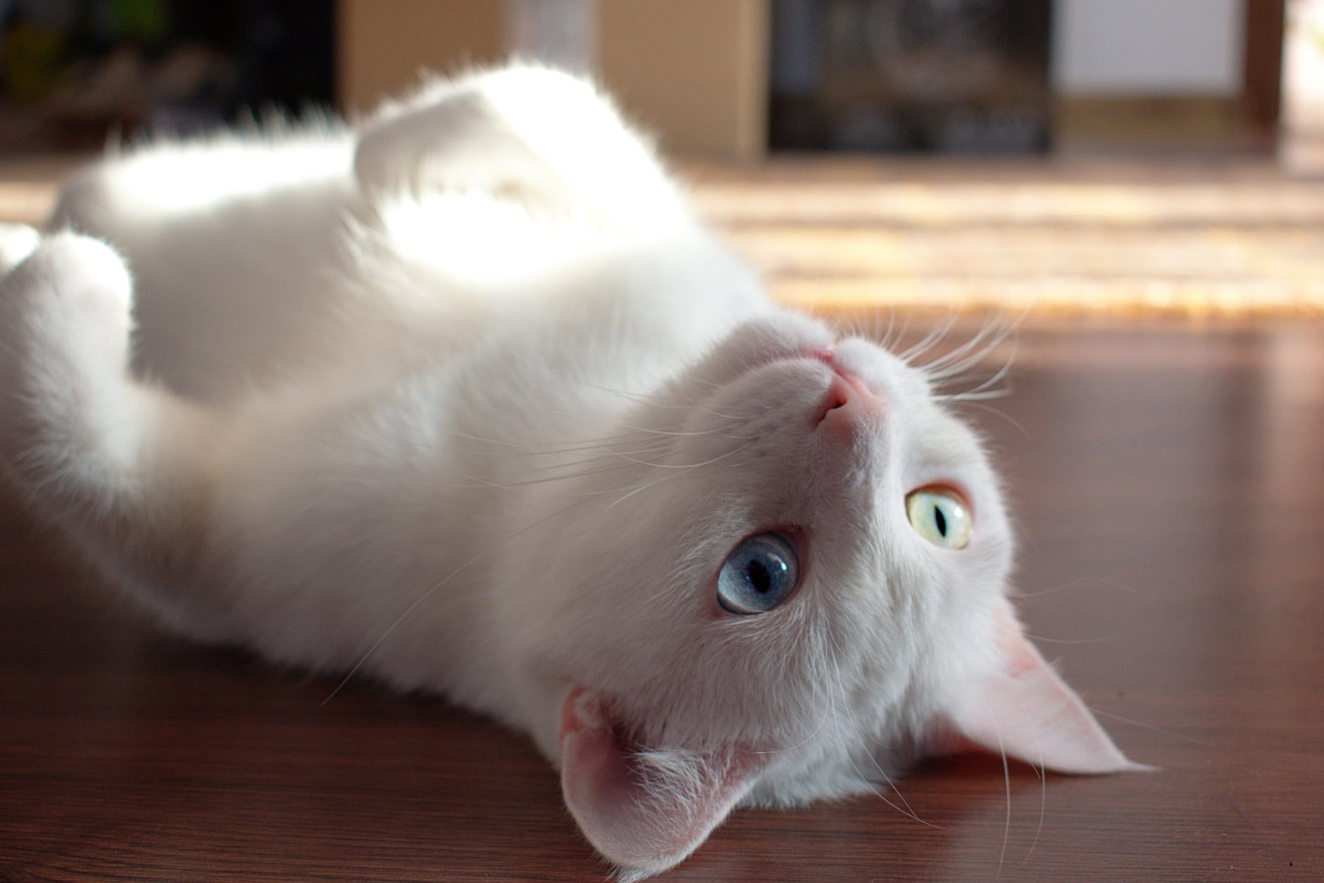 close up photo of kitty laying on floor